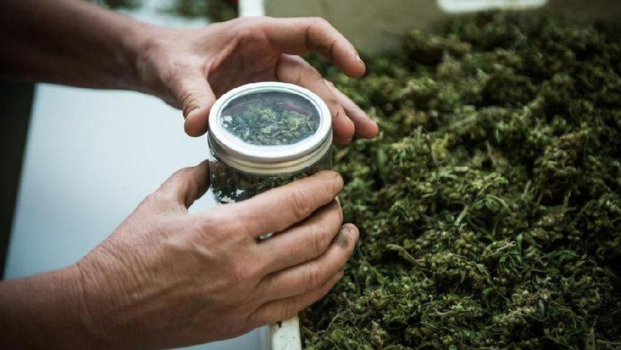https://www.ragusanews.com//immagini_articoli/17-01-2019/cannabis-legale-ragusa-anche-convegno-500.jpg