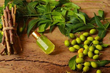 https://www.ragusanews.com//immagini_articoli/17-01-2021/l-olio-di-neem-proprieta-e-benefici-di-un-potente-alleato-per-la-bellezza-280.jpg