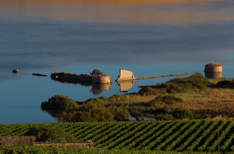 https://www.ragusanews.com//immagini_articoli/17-02-2014/20-mln-di-euro-per-la-riconversione-dei-vigneti-in-sicilia-500.jpg