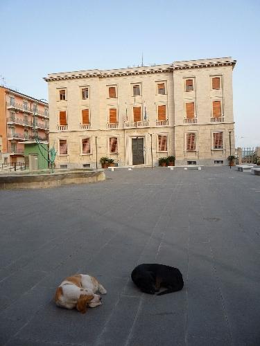 http://www.ragusanews.com//immagini_articoli/17-03-2014/e-poi-dicono-che-non-ce-un-cane-500.jpg