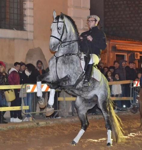http://www.ragusanews.com//immagini_articoli/17-03-2017/danza-equestre-spagnola-scicli-500.jpg