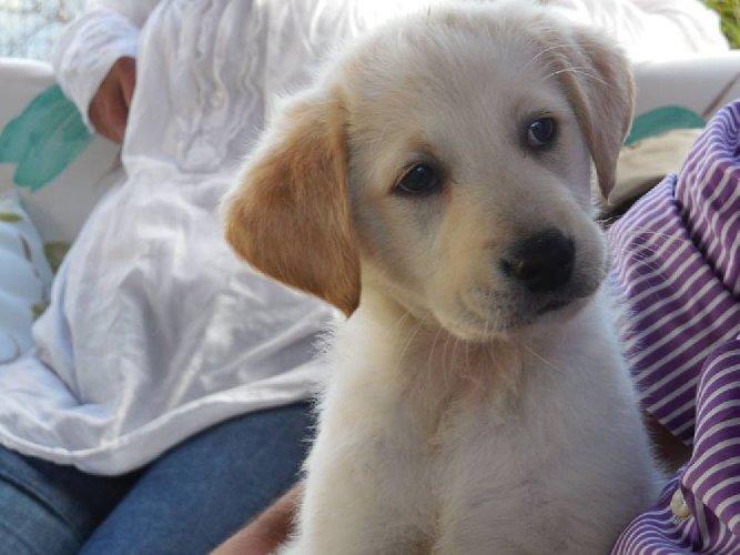 https://www.ragusanews.com//immagini_articoli/17-04-2018/ragusa-ricovero-randagi-servizio-affidato-dogs-town-500.jpg