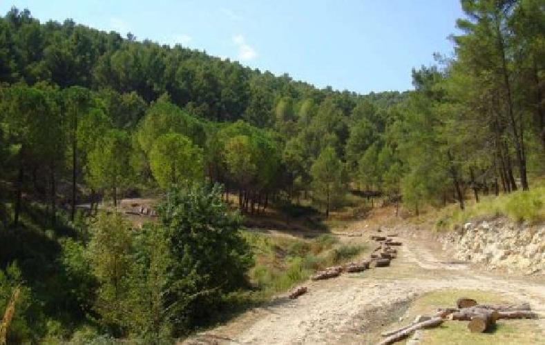 https://www.ragusanews.com//immagini_articoli/17-05-2015/escursione-al-museo-aperto-di-giarratana-e-bosco-di-calaforno-500.jpg
