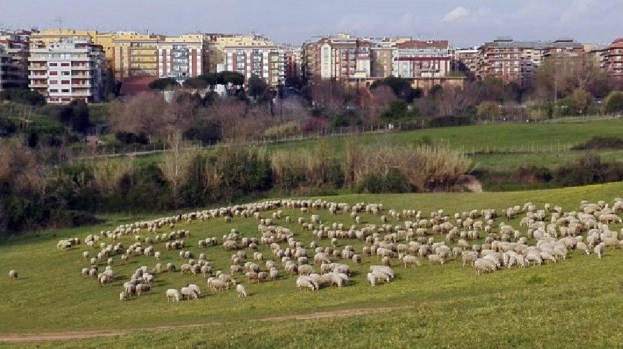 https://www.ragusanews.com//immagini_articoli/17-05-2018/erba-alta-roma-virginia-raggi-useremo-pecore-500.jpg