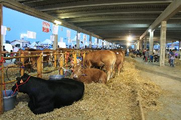 https://www.ragusanews.com//immagini_articoli/17-06-2019/1560797930-la-fiera-agroalimentare-a-modica-1-240.jpg