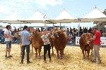 https://www.ragusanews.com//immagini_articoli/17-06-2019/la-fiera-agroalimentare-a-modica-100.jpg