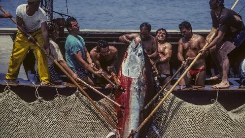 https://www.ragusanews.com//immagini_articoli/17-06-2021/prima-i-pesci-poi-i-pescatori-nuova-stretta-ue-tutelare-il-mediterraneo-280.jpg