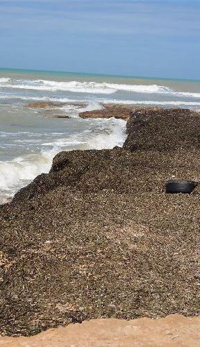 https://www.ragusanews.com//immagini_articoli/17-07-2014/autorizzata-rimozione-alghe-a-punta-di-mola-500.jpg