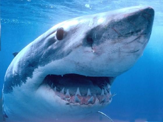 http://www.ragusanews.com//immagini_articoli/17-07-2016/siracusa-avvistato-squalo-a-due-miglia-da-ognina-420.jpg