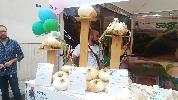 http://www.ragusanews.com//immagini_articoli/17-08-2016/a-ferragosto-l-alternativa-e-la-sagra-della-cipolla-100.jpg