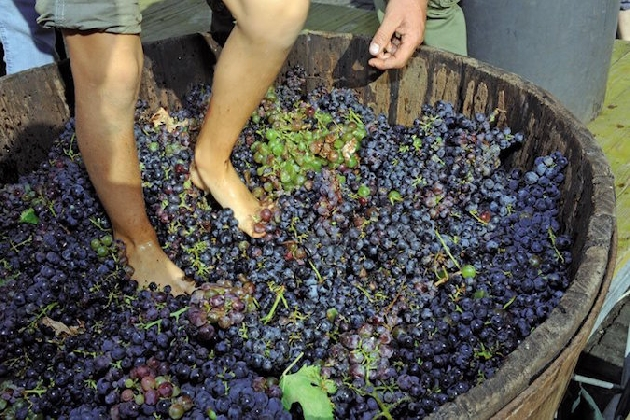 http://www.ragusanews.com//immagini_articoli/17-08-2016/la-pigiatura-del-vino-a-pachino-420.jpg