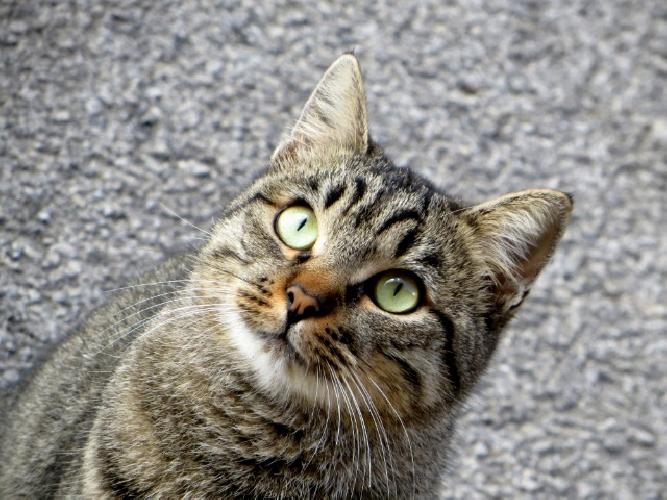 https://www.ragusanews.com//immagini_articoli/17-09-2015/chi-avvelena-i-gatti-a-giarratana-500.jpg
