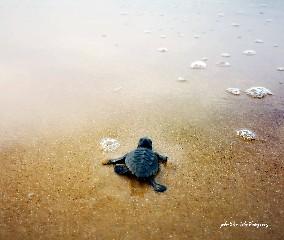 https://www.ragusanews.com//immagini_articoli/17-09-2020/1600338044-una-schiusa-di-tartarughine-a-casuzze-2-240.jpg