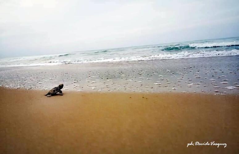 https://www.ragusanews.com//immagini_articoli/17-09-2020/1600338044-una-schiusa-di-tartarughine-a-casuzze-3-500.jpg