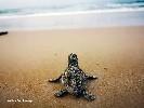 https://www.ragusanews.com//immagini_articoli/17-09-2020/una-schiusa-di-tartarughine-a-casuzze-100.jpg
