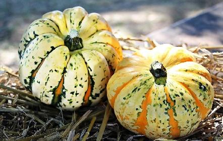 https://www.ragusanews.com//immagini_articoli/17-09-2021/dieta-d-autunno-gli-alimenti-di-stagione-per-tornare-in-forma-280.jpg