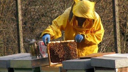 https://www.ragusanews.com//immagini_articoli/17-10-2018/dieci-soggetti-psichiatrici-faranno-apicoltura-240.jpg