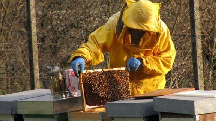 https://www.ragusanews.com//immagini_articoli/17-10-2018/dieci-soggetti-psichiatrici-faranno-apicoltura-500.jpg