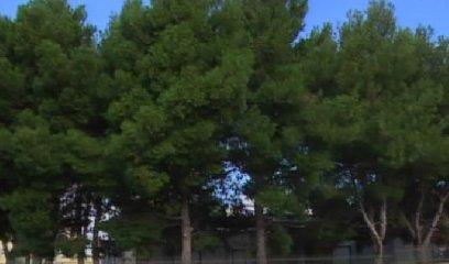 https://www.ragusanews.com//immagini_articoli/17-11-2018/manuela-pepi-merito-taglio-alberi-materna-bosco-240.jpg