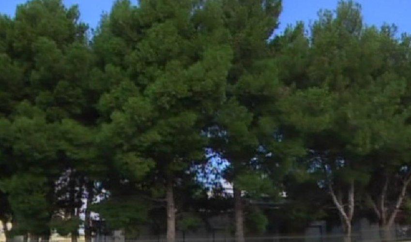 https://www.ragusanews.com//immagini_articoli/17-11-2018/manuela-pepi-merito-taglio-alberi-materna-bosco-500.jpg