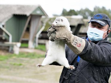https://www.ragusanews.com//immagini_articoli/17-11-2020/scongiurare-il-contagio-animale-se-diventa-panzoozia-e-incotrollabile-280.jpg