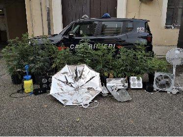 https://www.ragusanews.com//immagini_articoli/18-01-2021/coltivavano-marijuana-nella-casa-al-mare-arrestati-due-giovani-ragusani-280.jpg