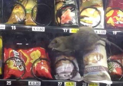 https://www.ragusanews.com//immagini_articoli/18-01-2021/cosenza-un-topo-nel-distributore-degli-snack-dell-ospedale-video-280.jpg