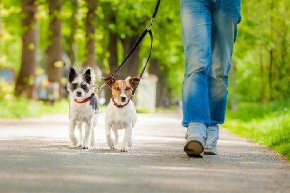 https://www.ragusanews.com//immagini_articoli/18-01-2021/perche-camminare-col-cane-fa-bene-alla-salute-ed-alla-mente-280.jpg