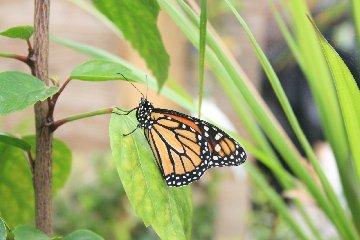 https://www.ragusanews.com//immagini_articoli/18-03-2018/apre-siracusa-casa-farfalle-240.jpg