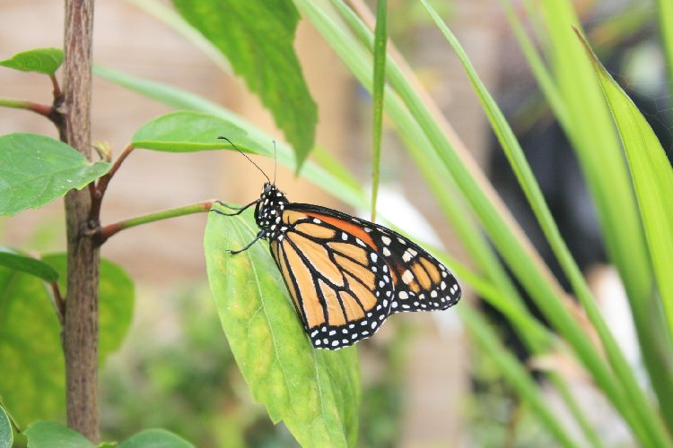 https://www.ragusanews.com//immagini_articoli/18-03-2018/apre-siracusa-casa-farfalle-500.jpg
