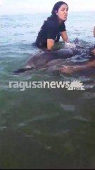 https://www.ragusanews.com//immagini_articoli/18-08-2018/delfino-spiaggia-pisciotto-soccorso-liberato-mare-240.jpg