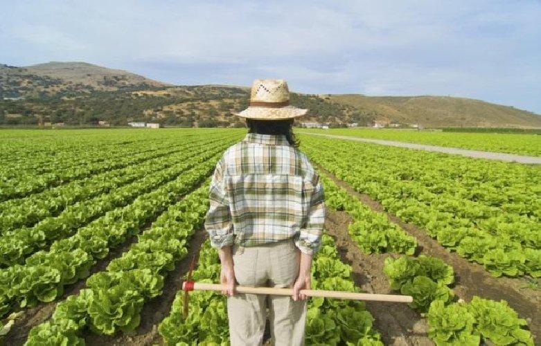 https://www.ragusanews.com//immagini_articoli/18-08-2018/innovazioni-agricoltura-arrivano-milioni-regione-500.jpg