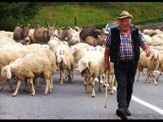https://www.ragusanews.com//immagini_articoli/18-08-2019/tradisce-il-marito-lui-viene-risarcito-con-71-pecore-240.jpg