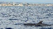 https://www.ragusanews.com//immagini_articoli/18-09-2018/delfini-montalbano-foto-100.jpg