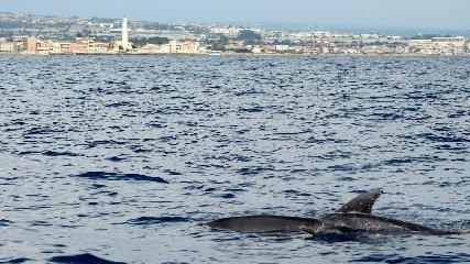 https://www.ragusanews.com//immagini_articoli/18-09-2018/delfini-montalbano-foto-240.jpg