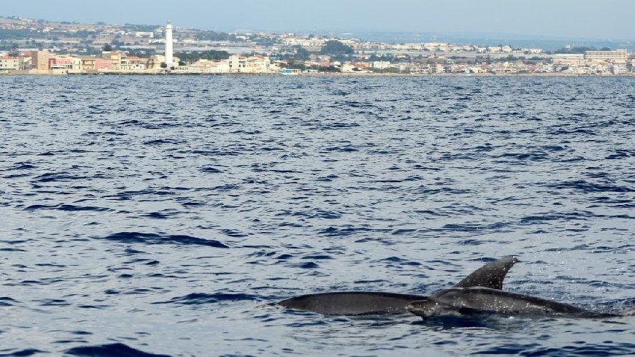 https://www.ragusanews.com//immagini_articoli/18-09-2018/delfini-montalbano-foto-500.jpg