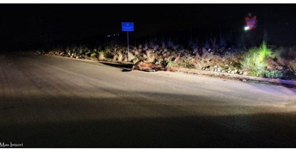 https://www.ragusanews.com//immagini_articoli/18-09-2019/cavallo-fugge-di-notte-investito-e-ucciso-da-un-ambulanza-500.jpg