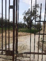 https://www.ragusanews.com//immagini_articoli/18-12-2019/1576677515-incendio-al-cimitero-di-comiso-1-240.jpg
