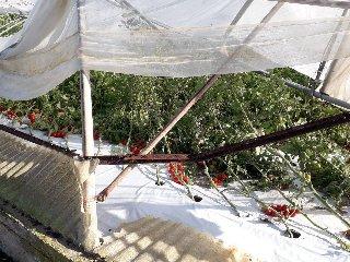 https://www.ragusanews.com//immagini_articoli/18-12-2019/i-danni-tromba-d-aria-marza-240.jpg