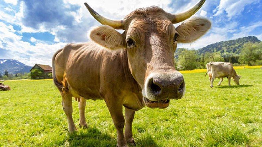 https://www.ragusanews.com//immagini_articoli/19-01-2021/mucca-scalcia-in-viso-una-bambina-di-13-anni-di-rosolini-500.jpg