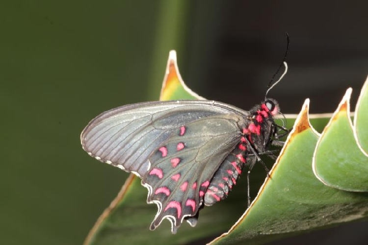 http://www.ragusanews.com//immagini_articoli/19-02-2016/la-casa-delle-farfalle-inaugura-il-12-marzo-500.jpg