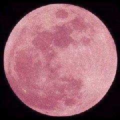https://www.ragusanews.com//immagini_articoli/19-04-2019/stasera-la-luna-rosa-mi-parla-di-te-240.jpg