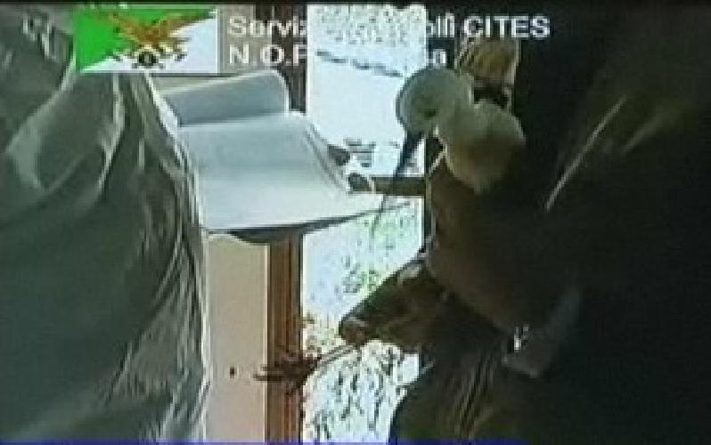 https://www.ragusanews.com//immagini_articoli/19-05-2011/restituiti-di-nuovo-gli-uccelli-sequestrati-al-veterinario-di-scicli-500.jpg