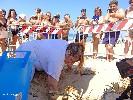 https://www.ragusanews.com//immagini_articoli/19-07-2020/anche-le-spiagge-camarinesi-hanno-un-nido-di-tartarughe-100.jpg