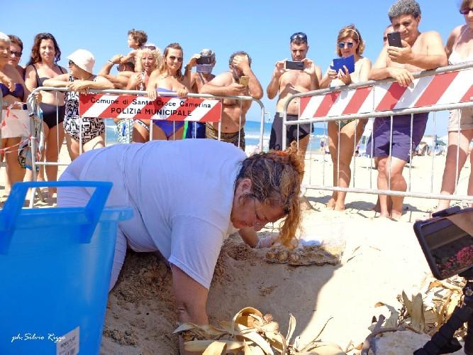 https://www.ragusanews.com//immagini_articoli/19-07-2020/anche-le-spiagge-camarinesi-hanno-un-nido-di-tartarughe-500.jpg