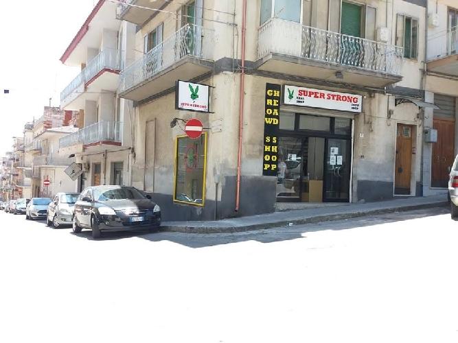 http://www.ragusanews.com//immagini_articoli/19-08-2017/ragusa-nasce-primo-growshop-500.jpg
