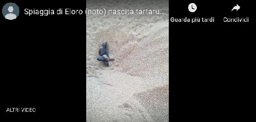 https://www.ragusanews.com//immagini_articoli/19-08-2019/abbiamo-100-tartarughine-appena-nate-video-240.png
