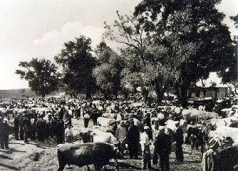 https://www.ragusanews.com//immagini_articoli/19-08-2019/san-bartolomeo-e-la-fiera-bestiame-a-giarratana-240.jpg