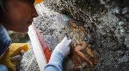 https://www.ragusanews.com//immagini_articoli/19-11-2018/archeologia-affiora-affresco-luci-rosse-pompei-100.jpg