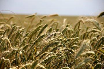 https://www.ragusanews.com//immagini_articoli/19-11-2019/dieta-dei-cereali-per-perdere-peso-240.jpg